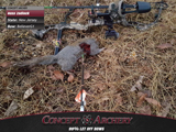 A perfect 22 yard shot with broadhead from a BelieverG1.
